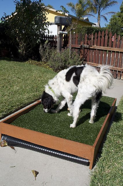 Best ideas about Patio Dog Potty DIY . Save or Pin 1000 images about Diy dog porch potty on Pinterest Now.