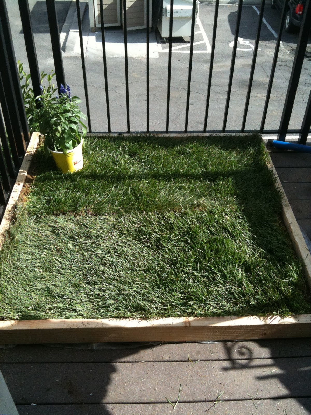 Best ideas about Patio Dog Potty DIY . Save or Pin super dog charlie pants and me Dog Potty for Patio Build Now.