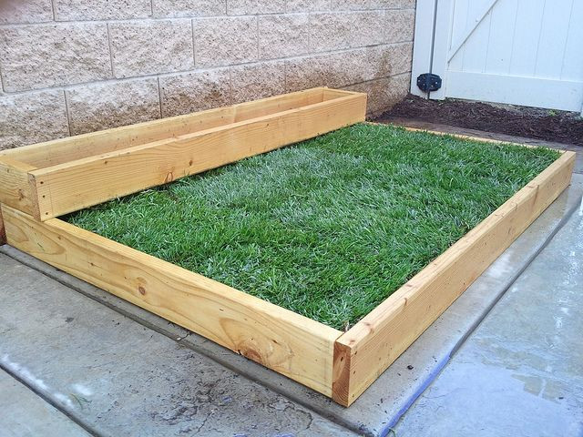 Best ideas about Patio Dog Potty DIY . Save or Pin Planting Grass on Concrete – Part 1 Now.