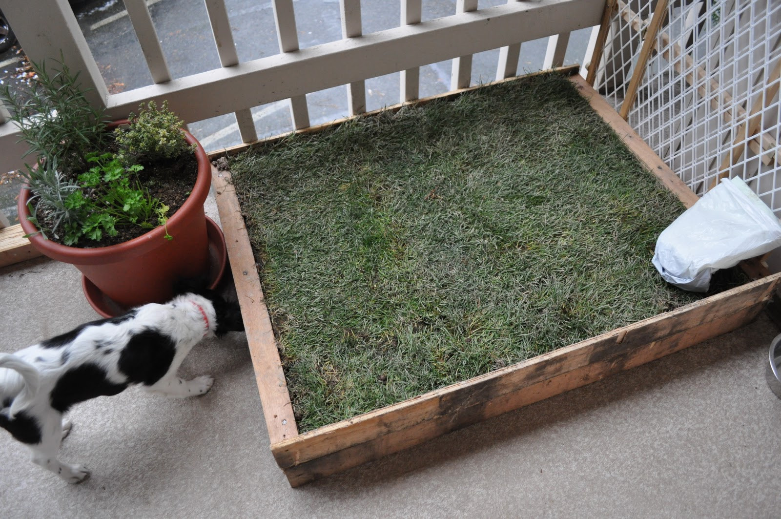 Best ideas about Patio Dog Potty DIY . Save or Pin Instead of walking their dog these people just let it shit Now.