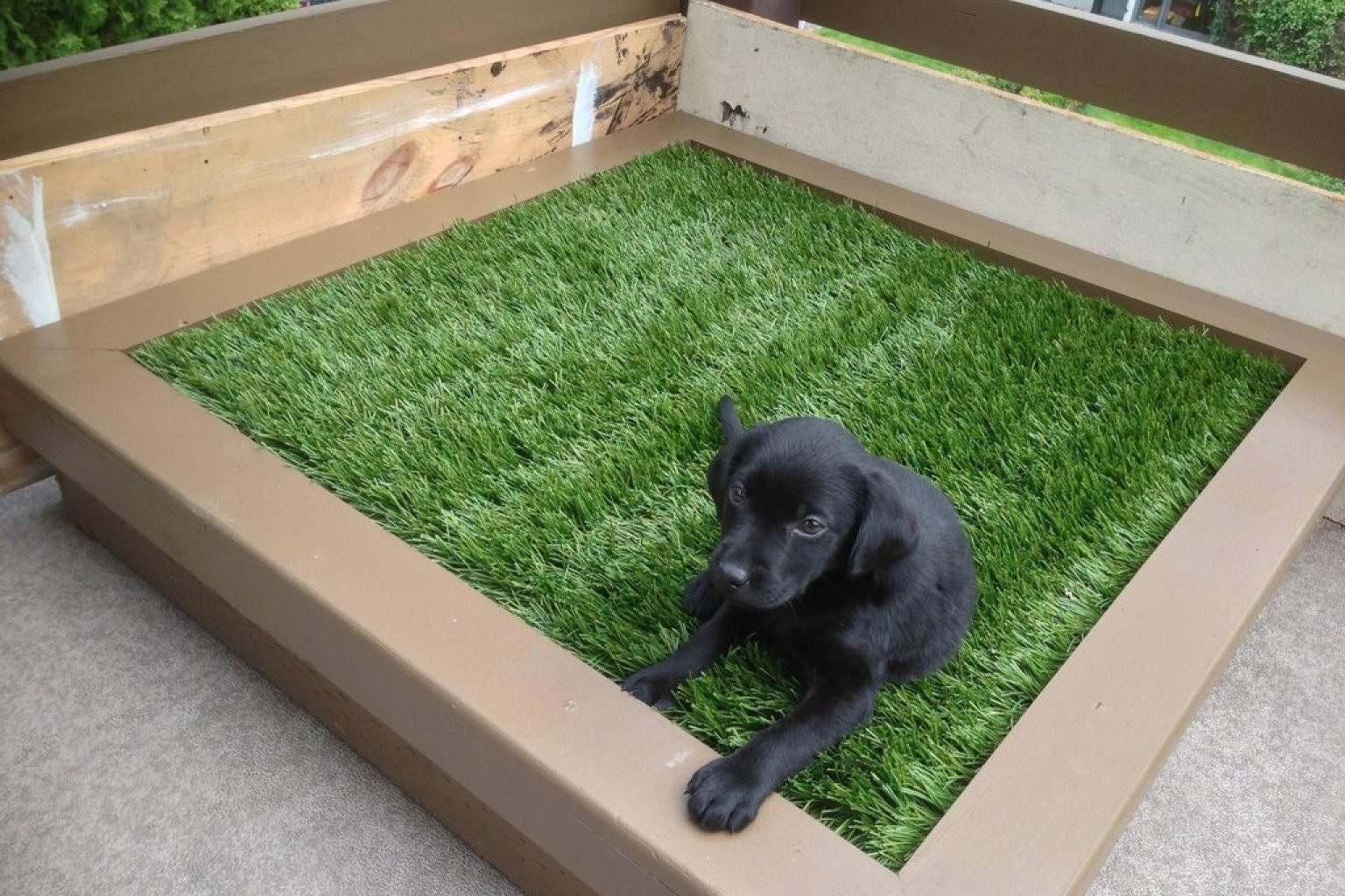 Best ideas about Patio Dog Potty DIY . Save or Pin DIY Porch Potty Is The Ultimate Solution For City Dogs Now.