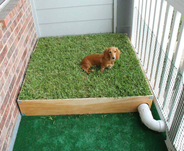 Best ideas about Patio Dog Potty DIY . Save or Pin Dog Porch Potty with Real Grass and Drainage System Now.