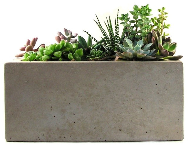 Best ideas about Rectangular Indoor Planter . Save or Pin Rectangular Concrete Planter Modern Indoor Pots And Now.