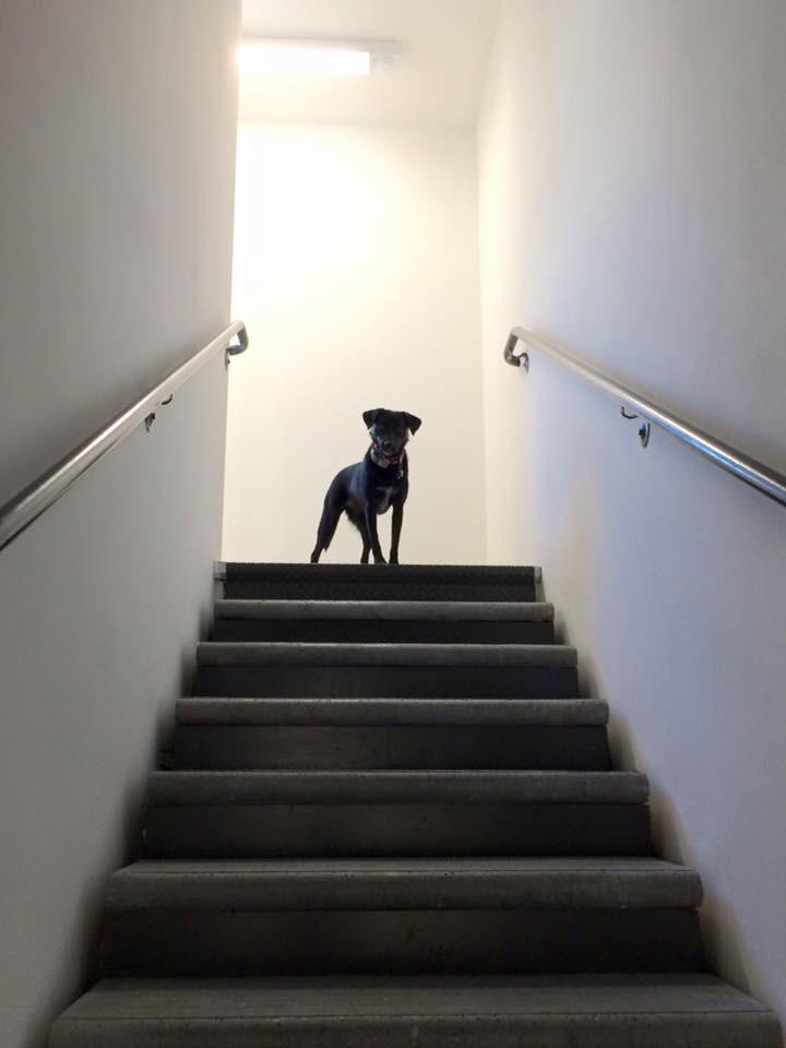Best ideas about Reddit The Staircase . Save or Pin My dog at the top of the stairs pics Now.