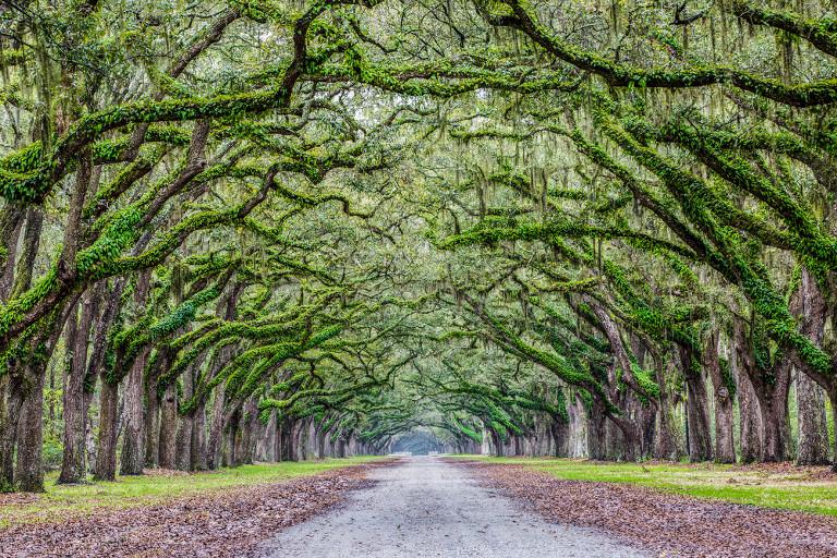 Best ideas about South Carolina Landscape . Save or Pin South Carolina Cleveland Fine Art & Landscape Now.