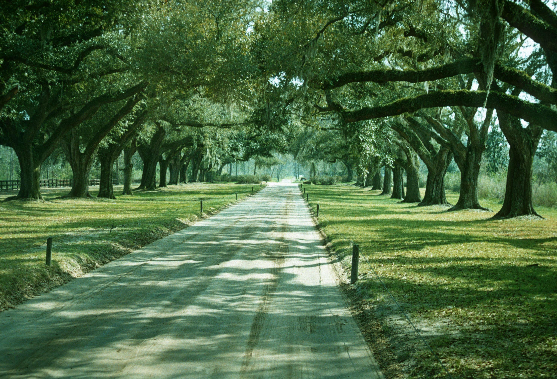 Best ideas about South Carolina Landscape . Save or Pin Quercus specimen avenue of live oaks South Carolina Now.