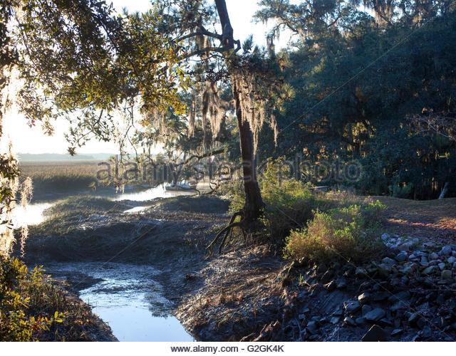 Best ideas about South Carolina Landscape . Save or Pin South Carolina Landscape Stock s & South Carolina Now.