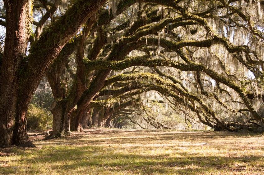 Best ideas about South Carolina Landscape . Save or Pin The Teacher s Academy Wel es South Carolina Teachers Now.