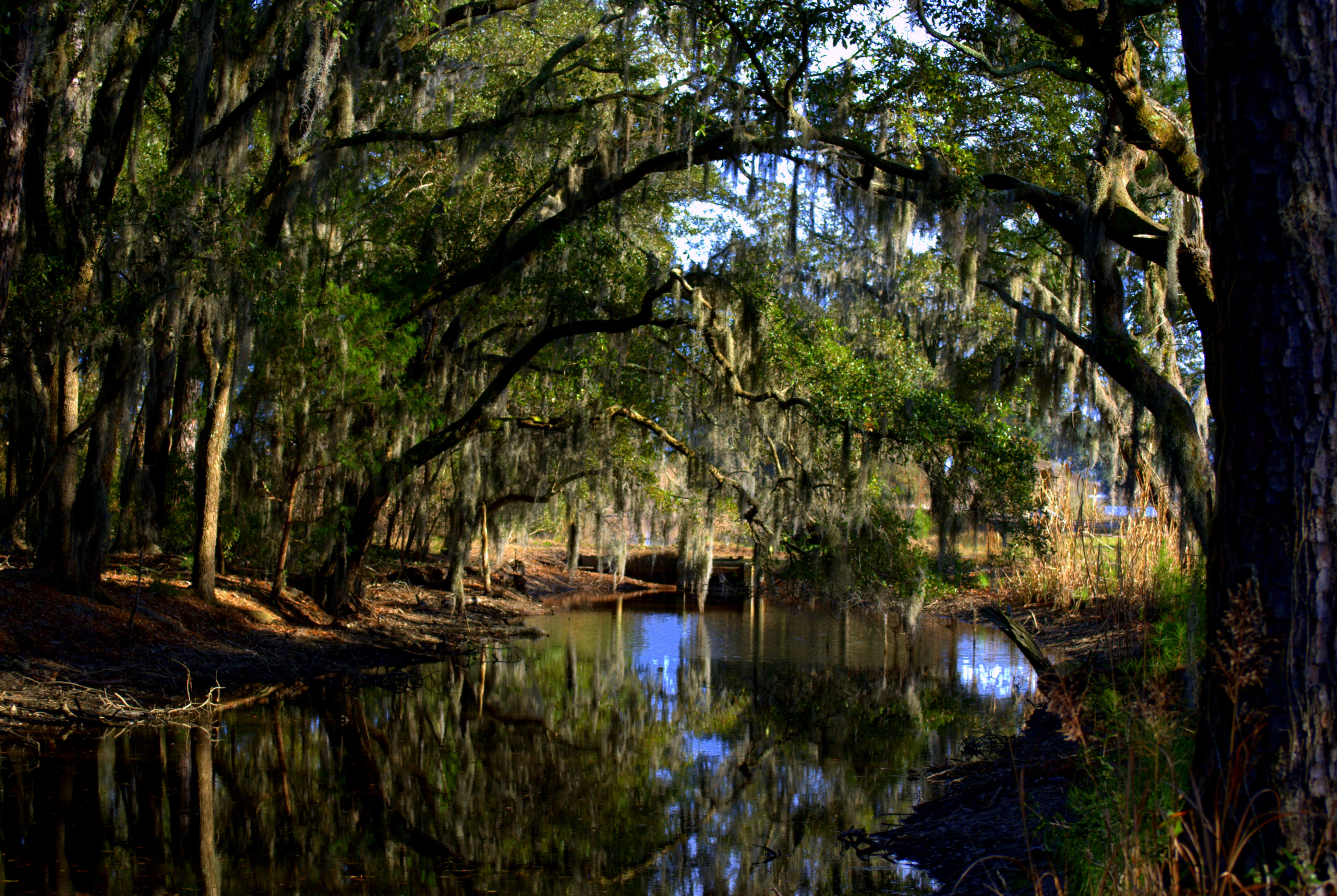 Best ideas about South Carolina Landscape . Save or Pin landscape – Middle of Everywhere Now.