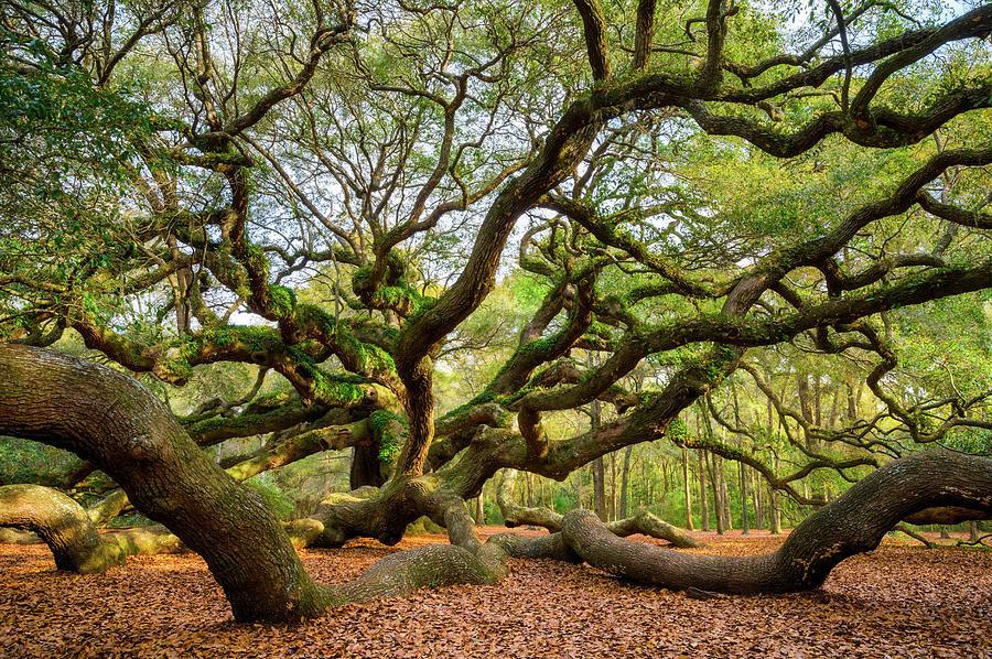 Best ideas about South Carolina Landscape . Save or Pin Charleston Sc Angel Oak Tree South Carolina Landscape Now.