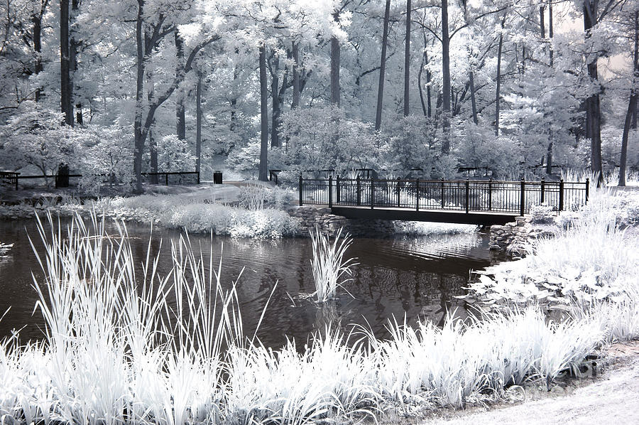 Best ideas about South Carolina Landscape . Save or Pin Dreamy Surreal South Carolina Pond Landscape graph by Now.