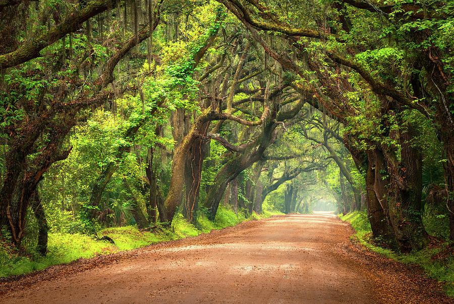 Best ideas about South Carolina Landscape . Save or Pin Edisto Island South Carolina Dirt Road Landscape Now.