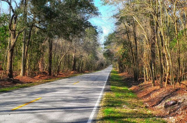 Best ideas about South Carolina Landscape . Save or Pin Free photo South Carolina Landscape Scenic Free Image Now.