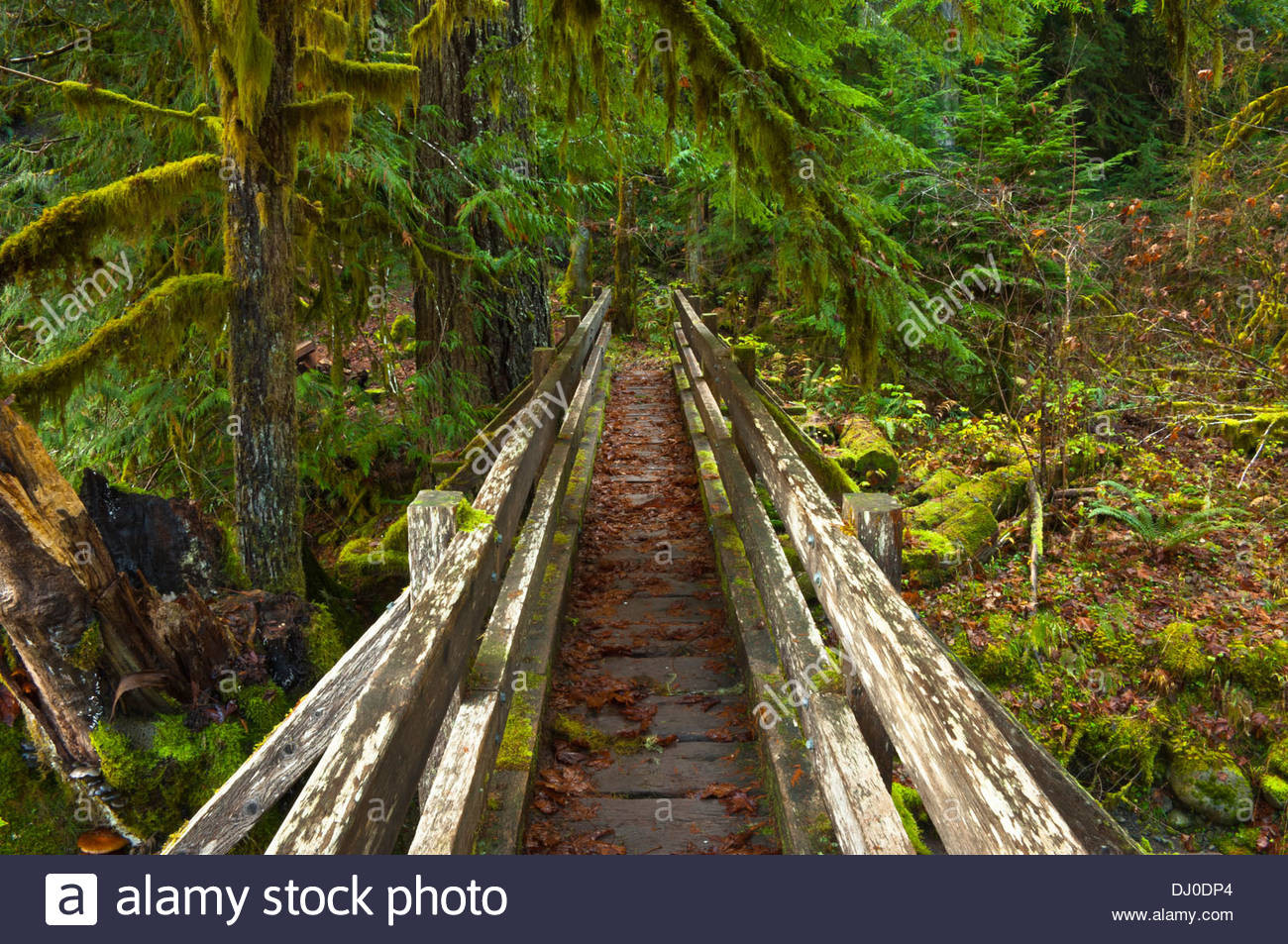 Best ideas about Staircase Olympic National Park . Save or Pin Shady Lane Trail Staircase Area Olympic National Park Now.