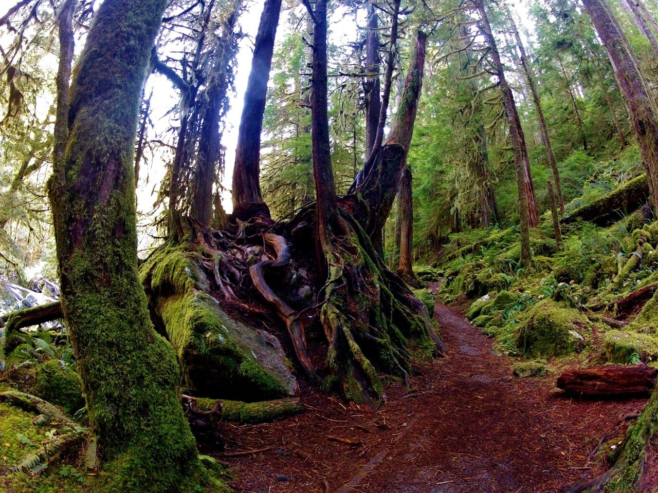 Best ideas about Staircase Olympic National Park . Save or Pin The Seven Highlights of Hiking Olympic's Staircase Loop Now.