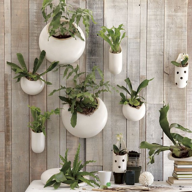 Best ideas about Wall Planters Indoor . Save or Pin Shane Powers Ceramic Wall Planters Contemporary Indoor Now.