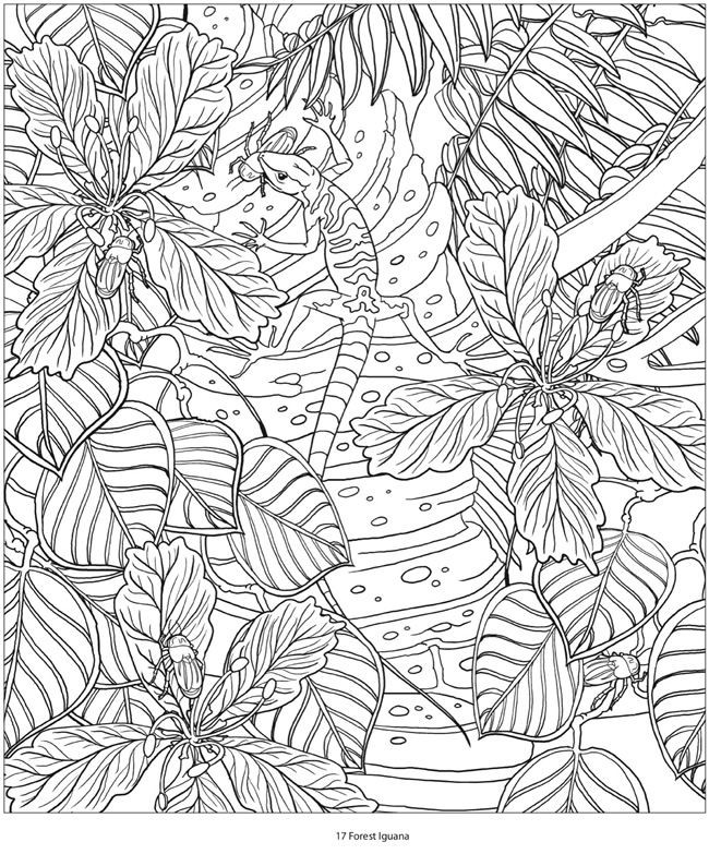 Best ideas about Adult Coloring Books Amazon . Save or Pin Creative Haven AMAZON ANIMALS A Coloring Book with a Now.