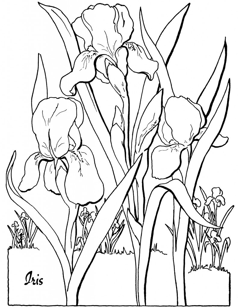 Best ideas about Adult Coloring Books Printable . Save or Pin 10 Floral Adult Coloring Pages The Graphics Fairy Now.