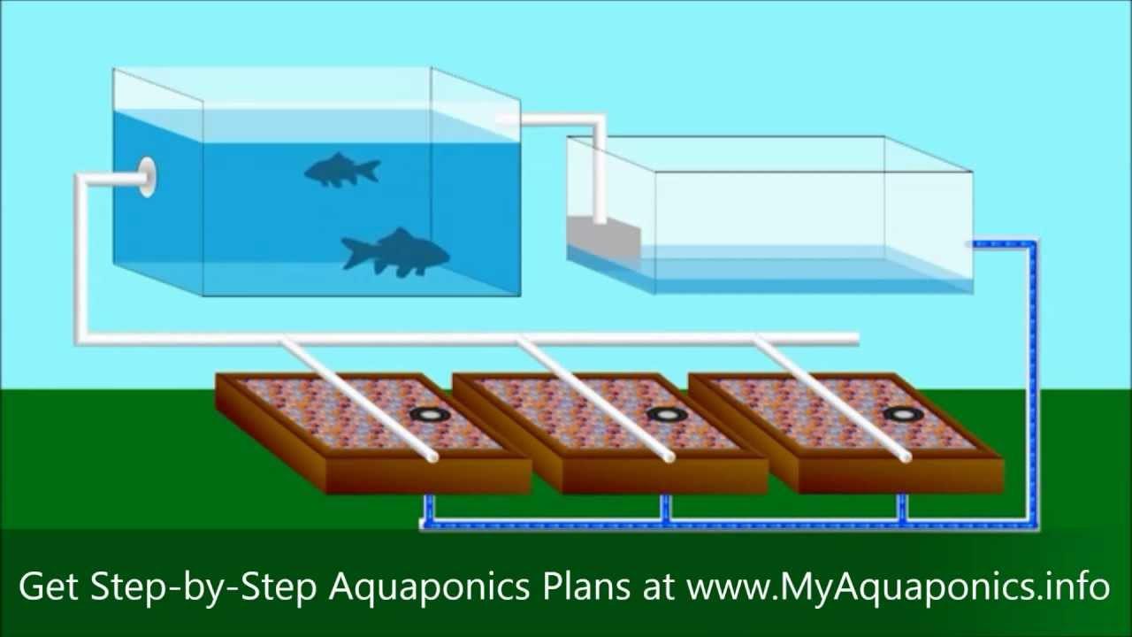 Best ideas about Aquaponic DIY Plans . Save or Pin DIY Aquaponics Now.