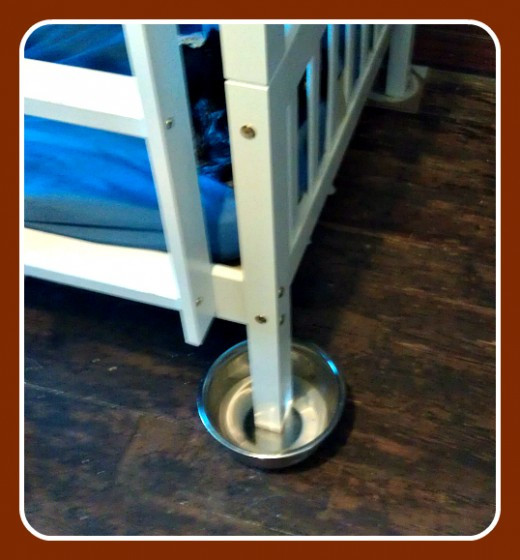 Best ideas about Bed Bug Trap DIY . Save or Pin Adhesive Bed Bug Traps Now.