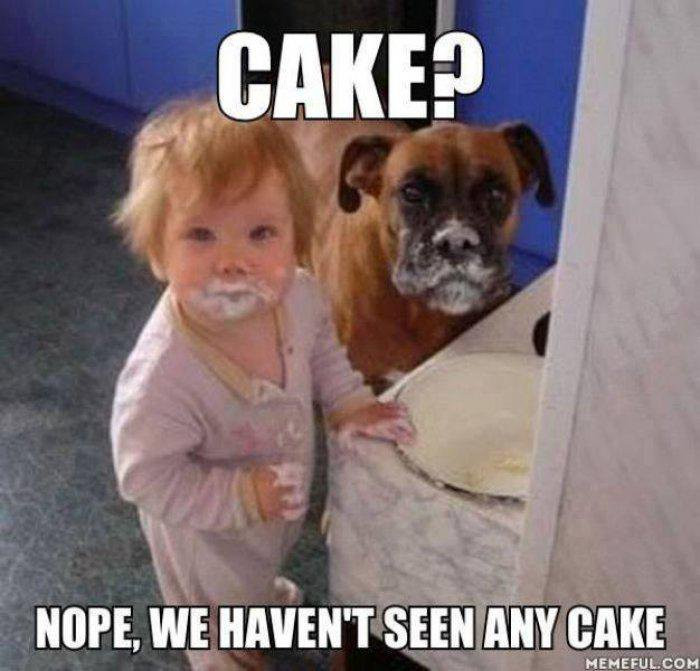 Best ideas about Birthday Cake Memes . Save or Pin 27 Most Funny Cake Meme And All The Time Now.