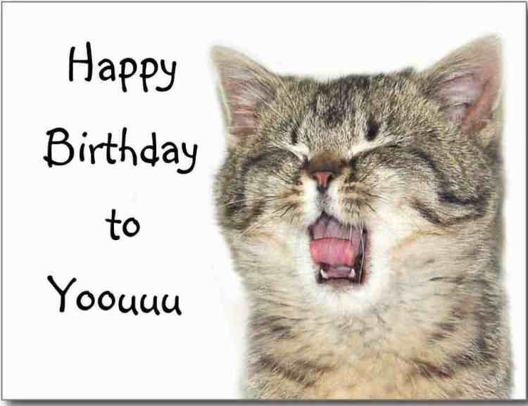 Best ideas about Birthday Cat Funny . Save or Pin 41 Best Funny Birthday Wishes For Birthday Boy Girl Aunt Now.
