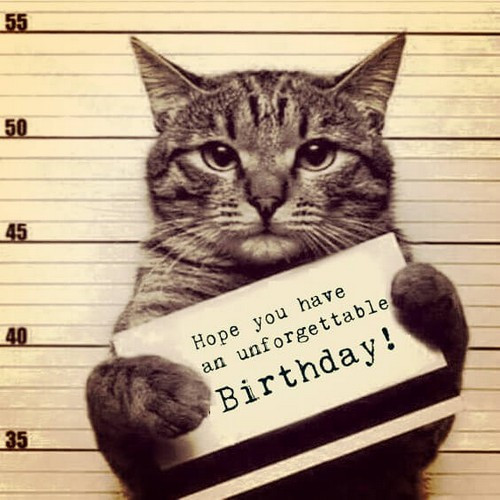 Best ideas about Birthday Cat Funny . Save or Pin 45 Cat Birthday Memes Now.