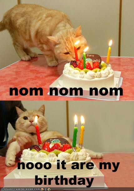Best ideas about Birthday Cat Funny . Save or Pin Babble My Birthday Cute & Crabby Now.