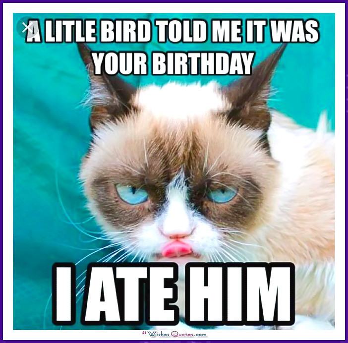 Best ideas about Birthday Cat Funny . Save or Pin Happy Birthday Memes with Funny Cats Dogs and Cute Now.