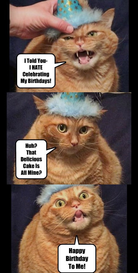 Best ideas about Birthday Cat Funny . Save or Pin I Can Has Cheezburger delicious Funny Animals line Now.