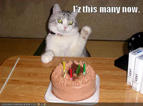 Best ideas about Birthday Cat Funny . Save or Pin roiremoldtrig happy birthday quotes funny Now.