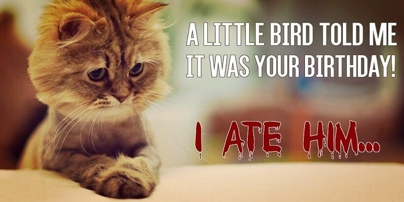 Best ideas about Birthday Cat Funny . Save or Pin Funny Birthday meme Now.