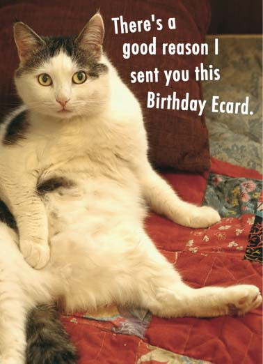Best ideas about Birthday Cat Funny . Save or Pin Birthday Ecards Cats Funny Ecards Free Printout Included Now.