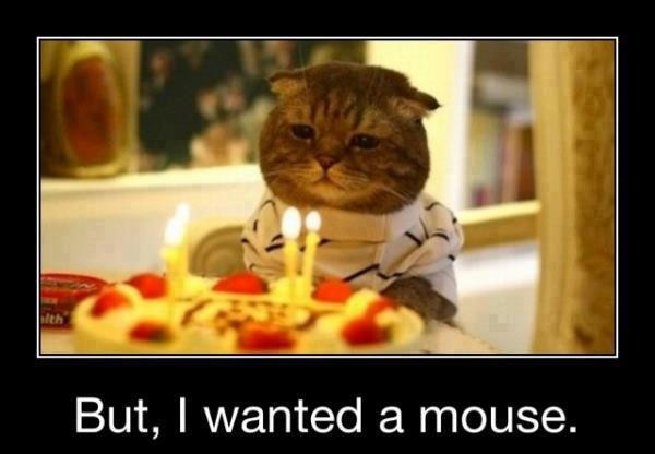 Best ideas about Birthday Cat Funny . Save or Pin 42 Most Happy Funny Birthday & Now.