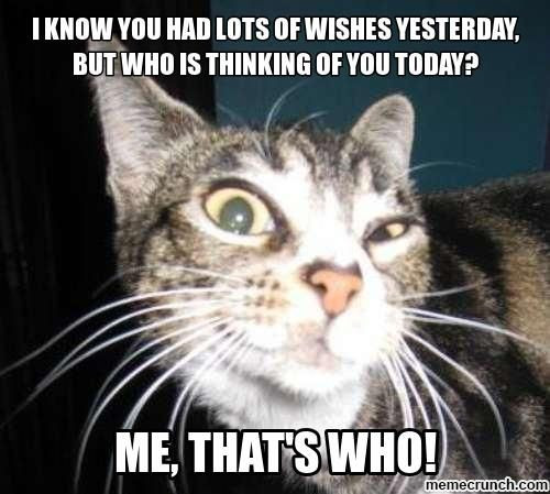 Best ideas about Birthday Cat Funny . Save or Pin Pin by Donda Willenburg on Mew Mew Cats = = Now.