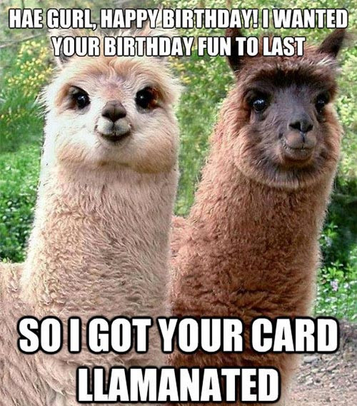 Best ideas about Birthday Pics Funny . Save or Pin Funny Llama Now.