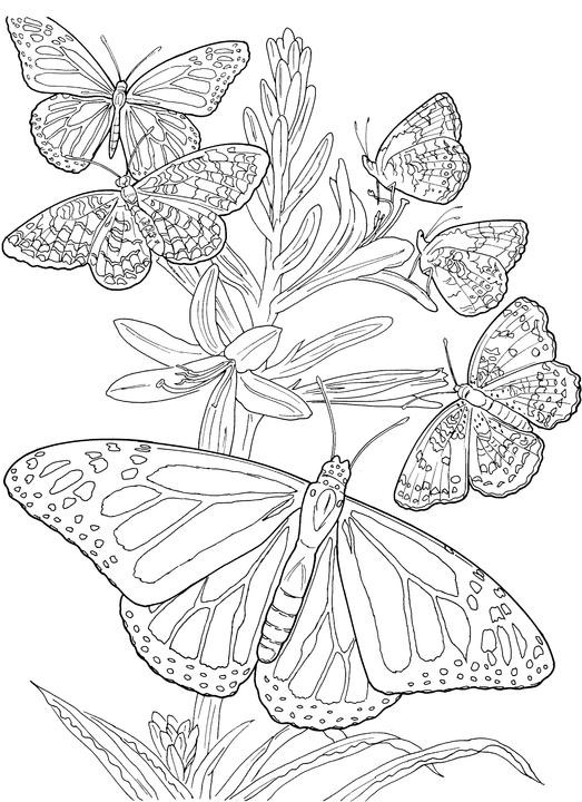 Best ideas about Butterfly Printable Coloring Pages For Adults . Save or Pin Butterfly Coloring Page Now.