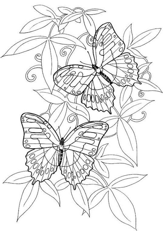 Best ideas about Butterfly Printable Coloring Pages For Adults . Save or Pin Hard butterflies Coloring Pages for Adults to print Now.