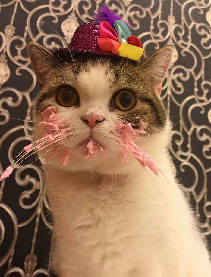 Best ideas about Cat Birthday Cake . Save or Pin This Cat Eating A Cake His Birthday Is Hilariously Now.