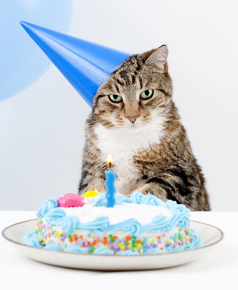 Best ideas about Cat Birthday Cake . Save or Pin Amazing Cake Birthday Cake Recipes Ideas And Inspiration Now.