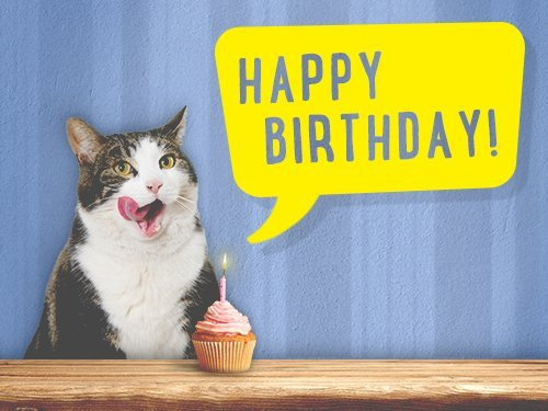 Best ideas about Cat Birthday Gifts . Save or Pin Amazon eGift Card – Birthday Cat – Purrfect Cat Breeds Now.