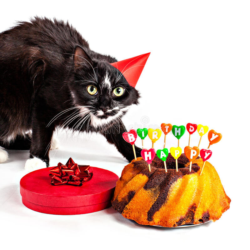 Best ideas about Cat Birthday Gifts . Save or Pin Cat With Party Hat And Birthday Gifts Stock Image Image Now.