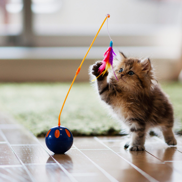 Best ideas about Cat Birthday Gifts . Save or Pin The 34 Best Gifts for Cat Lovers 2018 Now.