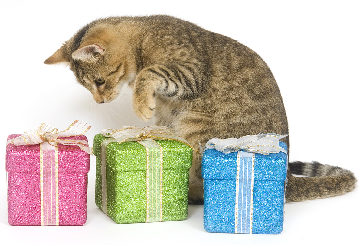 Best ideas about Cat Birthday Gifts . Save or Pin Amazing Cat Birthday Party Cake And Gift Ideas Now.
