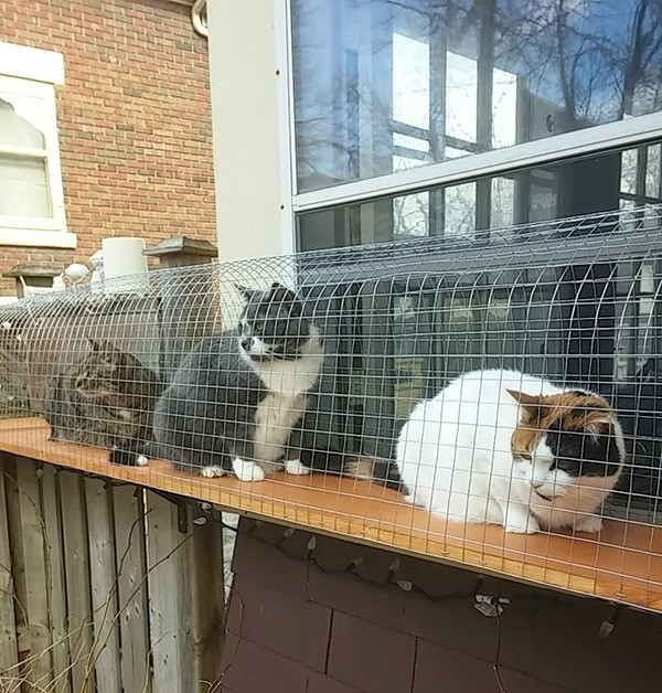 Best ideas about Cat Enclosure DIY . Save or Pin Another awesome outdoor cat enclosure Cuckoo4Design Now.