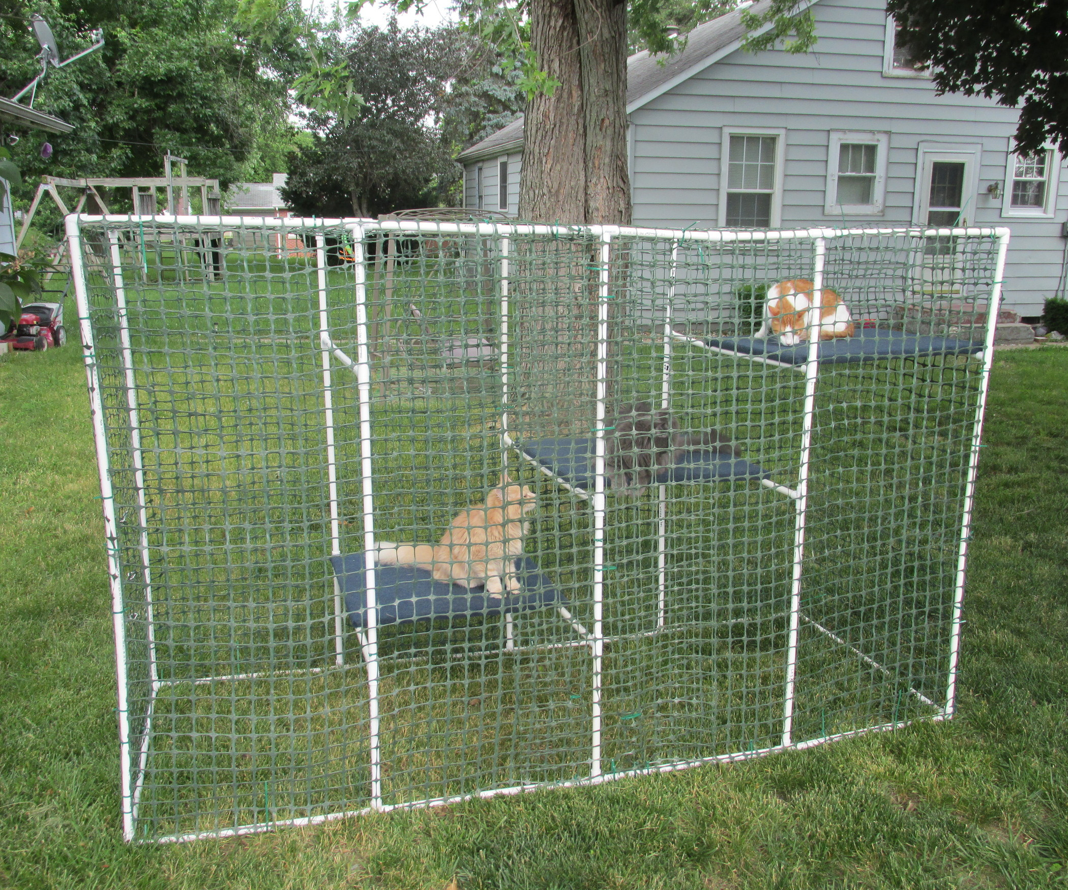 Best ideas about Cat Enclosure DIY . Save or Pin Cat Enclosure Now.