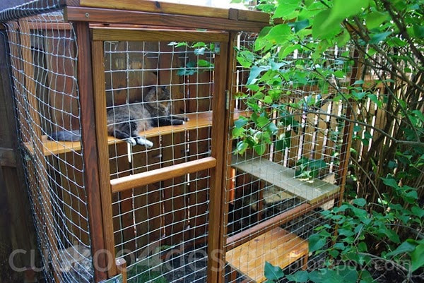 Best ideas about Cat Enclosure DIY . Save or Pin Easy DIY Cat Enclosure Cuckoo4Design Now.