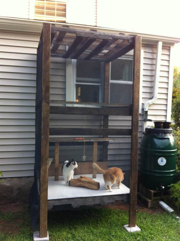 Best ideas about Cat Enclosure DIY . Save or Pin Best 25 Outdoor cat tree ideas on Pinterest Now.