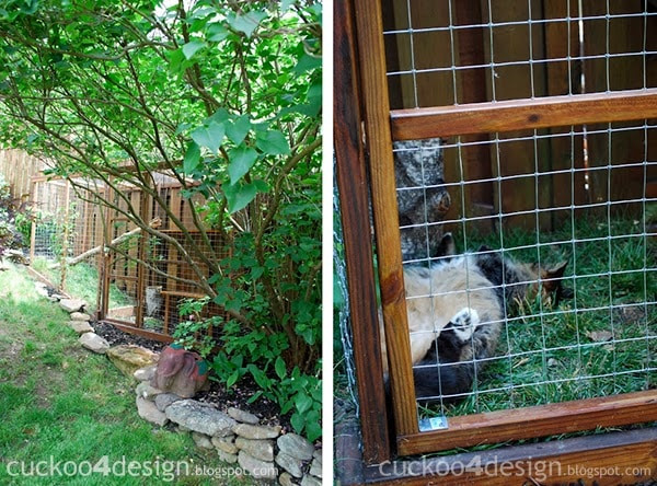 Best ideas about Cat Enclosure DIY . Save or Pin Easy DIY Cat Enclosure to keep your indoor cats happy and safe Now.