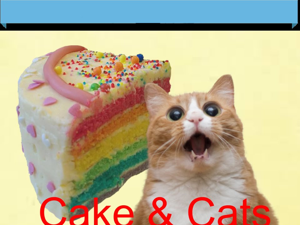 Best ideas about Cat Licking Your Birthday Cake . Save or Pin There s a Cat licking your Birthday Cake l Video Star Now.
